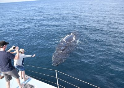Whale Watch Experience