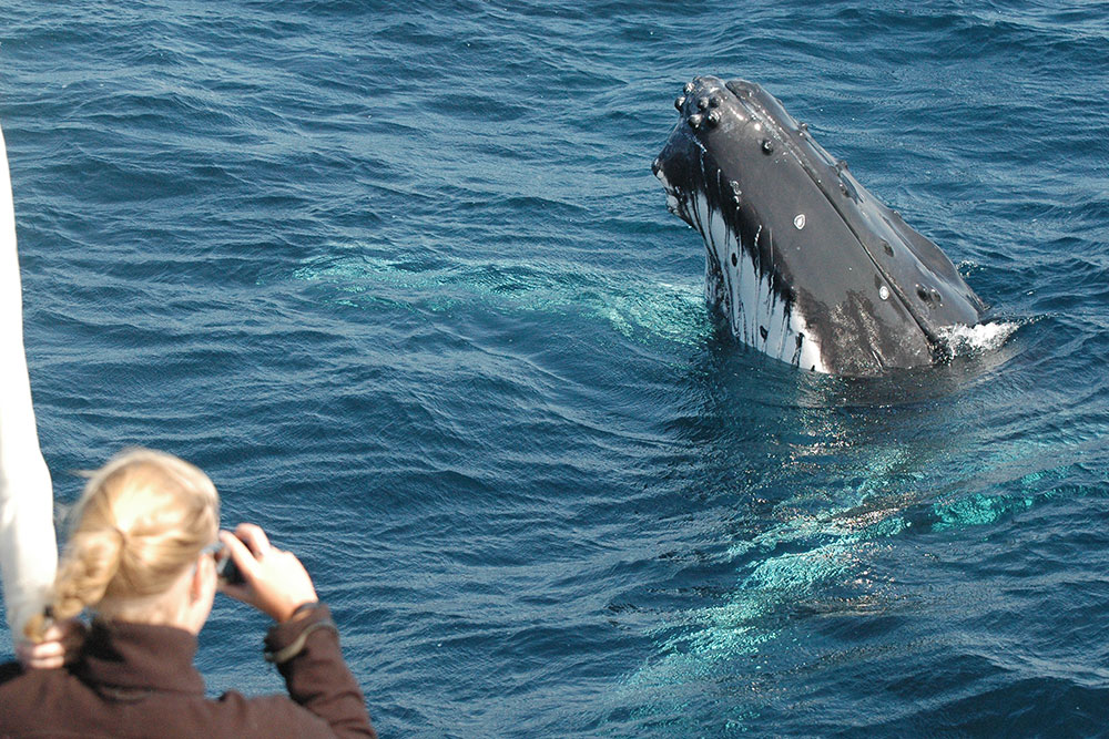 Whale Watch Experience Coffs Harbour
